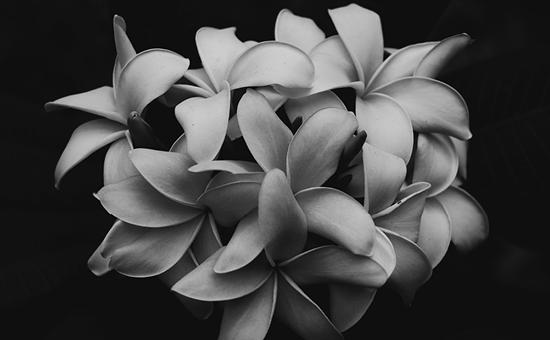 Floyd & Son flower arrangement